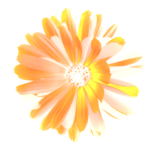 Orange3HOME
