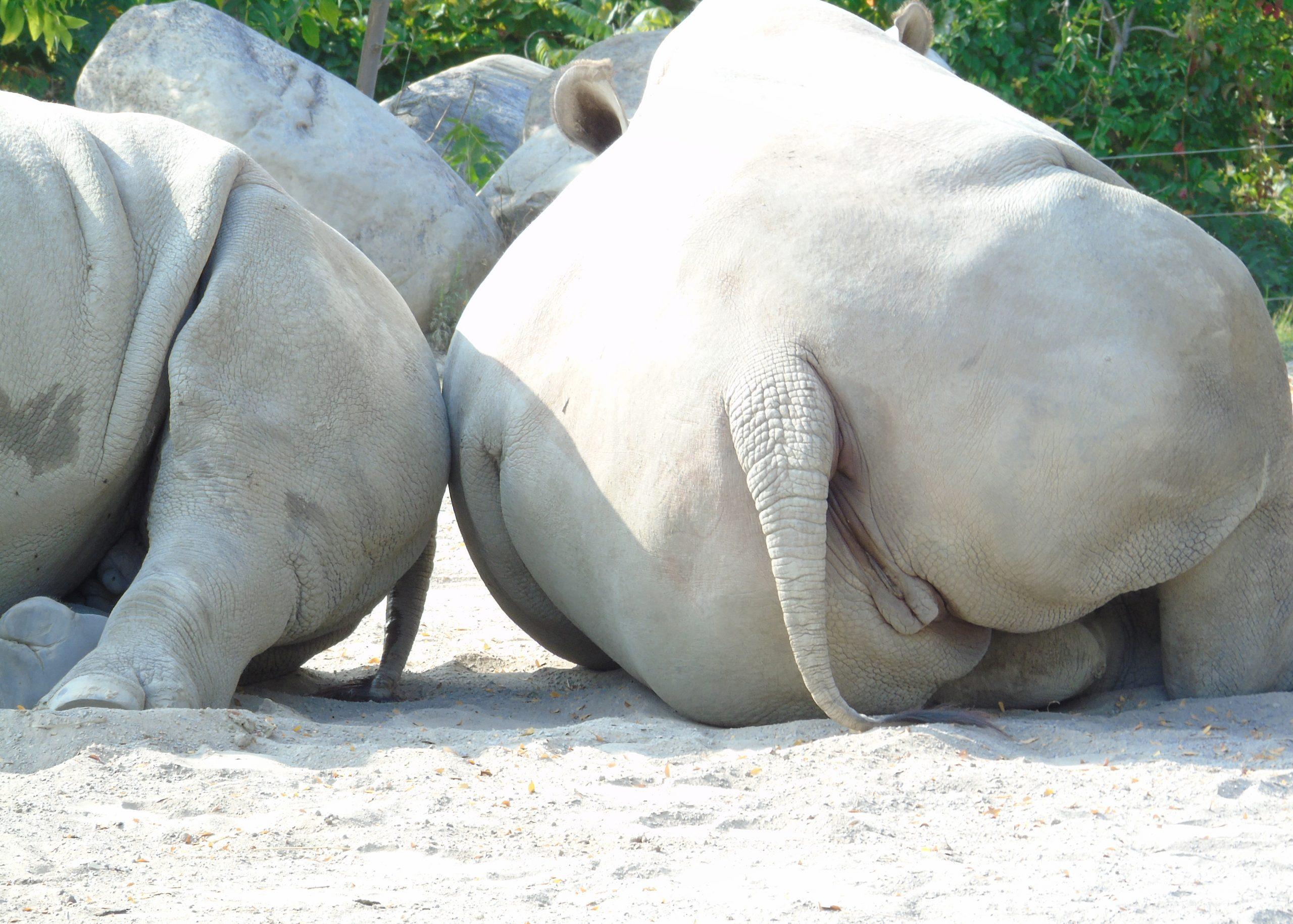 rhinossweetand sour1